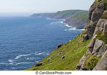 Rocky Atlantic Ocean coast - Rocky coast in Cape Spear,...