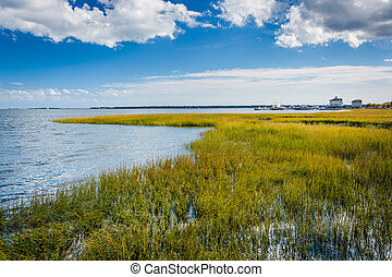 Marsh in Charleston, South Carolina.