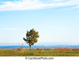 Lonely autumn tree on field - Lonely autumn tree on sky...