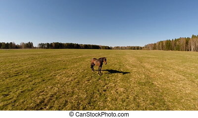 a horse stands in a field. aerial view - a horse stands in a...