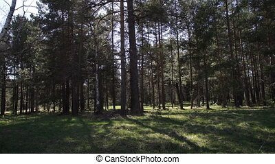 beautiful landscape with dense forest in spring - Tracking...