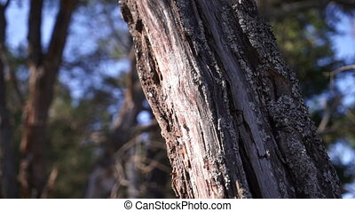 the tree trunk in the forest closeup - the tree trunk in the...