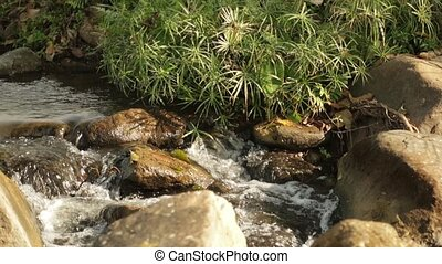 River Flows on the rocks and plants