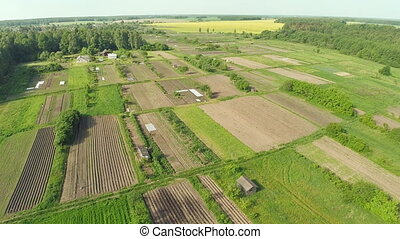 Green fields aerial view before harvest at summer.
