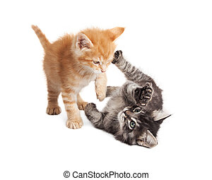 Two Kittens Playing on White Background