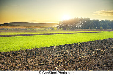 farm field - Beautiful sunset over the green large field
