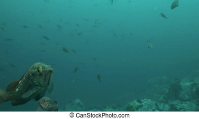 Fish and sea urchins among the rocks on seabed - Fish and...