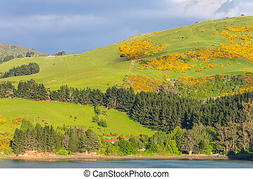 New Zealand Otago Region coastal landscape - Rural Scene...