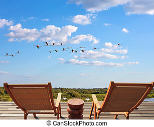 Sunbeds for birdwatching - Flock of pink flamingos in a free...