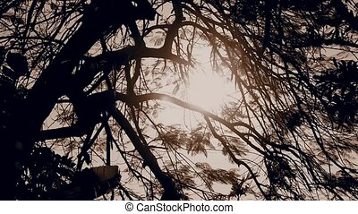 silhouette of tree with sun light background