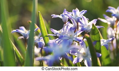Wild flowers willow gentians close up Video full hd