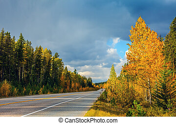 Great yellow autumn forest