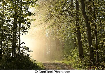 Spring forest on a foggy morning