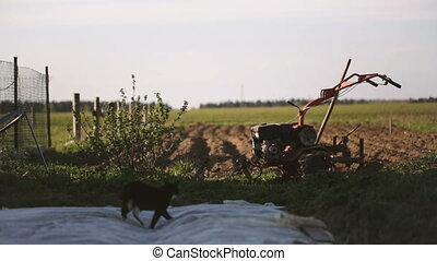Cat secretly gets on the plowed kitchen garden. Video full...