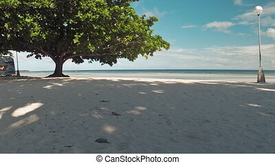 The beach with white sand with a tree Aerial view...