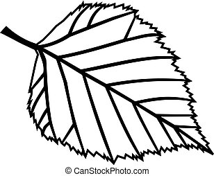 birch, Betula verrucosa, vector, isolated birch leaf,