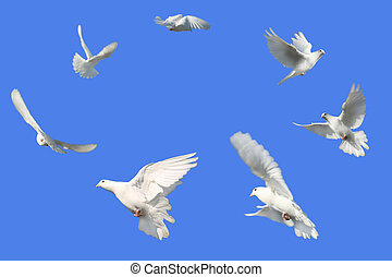 Circle of Doves - Concept image of Peace - White Doves...
