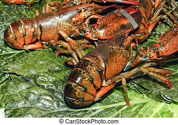 lobsters - some lobsters ready to sell in a fish market