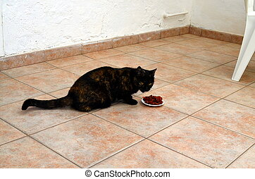 cat eating food from a plate