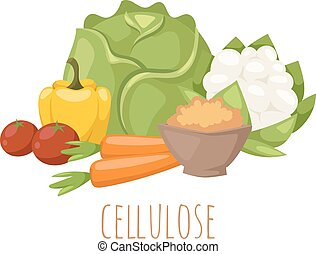 Cellulose food vector illustration. - Cellulose vegetables...