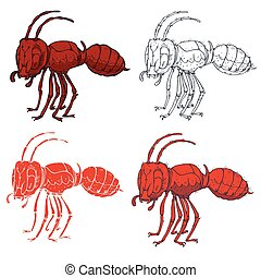 Small red ant