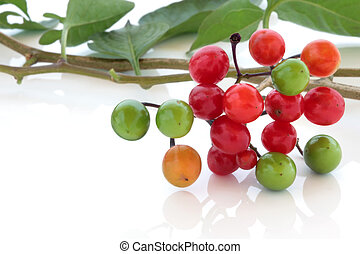 Deadly Nightshade - Deadly nightshade berries over white...