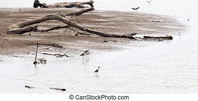 wild bird or stork standing resting walking and standing...