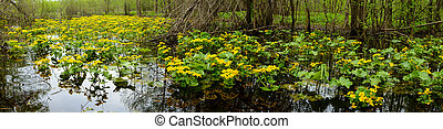 Yellow flowers growing in a pond in the forest