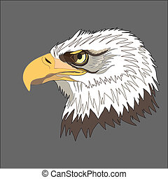 Raptors - Eagle. Bald eagle.