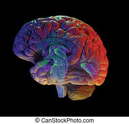 brain on black