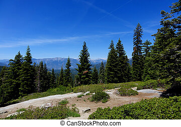 Kings Canyon - California - Mountains, forest and rocks at...