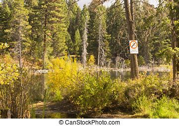 Quiet lake in forest - Quiet Rickey Lake in the forest with...