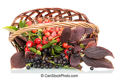 Autumn berries and leaves in a basket isolated on white...