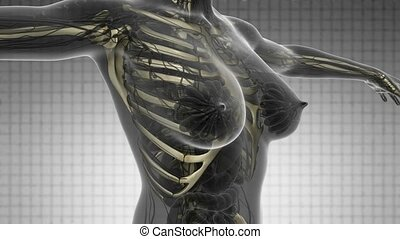 science anatomy scan of human body with skeletal bones