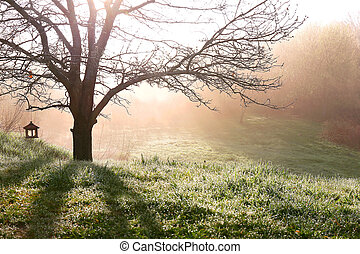 Bare Branched Spring Oak Tree Glowing in Morning Fog -...