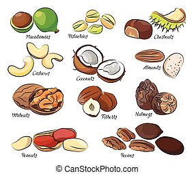 Collection of different nuts vector illustration Healthy...