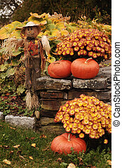 scarecrow with pumpkins - scarecrow and pumpkins next to...