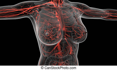 science anatomy scan of human body with red blood vessels....