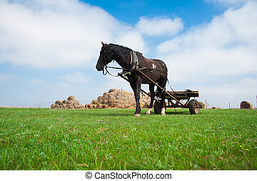 Horse grazes on the field - Horse grazes in the harness on...