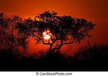 Savanna sunset - Sunset with silhouetted African savanna...