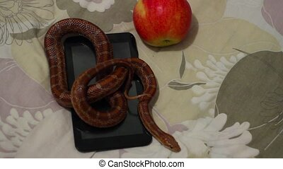 tempter serpent crawling on the tablet - tempter serpent...