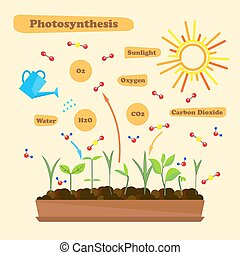 Image of photosynthesis - Illustration of photosynthesis -...