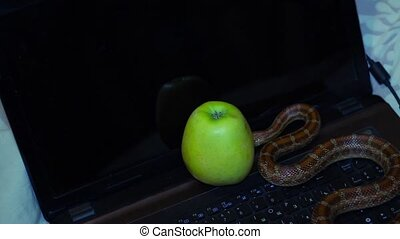 tempter serpent crawling on a laptop - snake crawling on a...