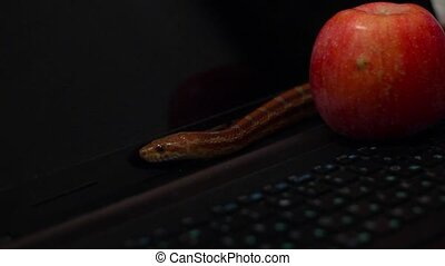 tempter serpent crawling on a laptop - snake crawled next to...