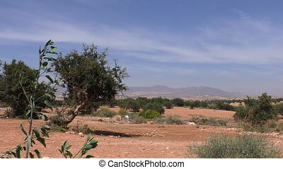 Moroccan landscape with argan trees - Typical Moroccan...