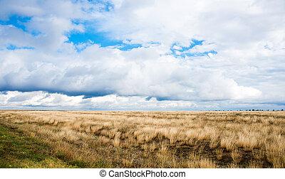 steppe - Autumn sunny steppe