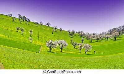 Flowering Trees in Switzerland - Flowering Trees Surrounded...