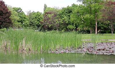 pond park Eger Hungary