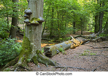 Tree Fungus In Green Forest - Fungus and moss growing on a...