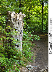 Tree Fungus And Forest Path - Fungus growing on a tree trunk...